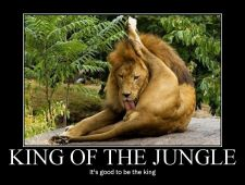 king_of_jungle.jpg
