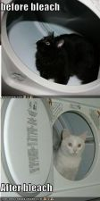 funny-pictures-black-white-cats.jpg
