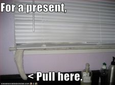 funny-pictures-cat-blinds-tail-present.jpg