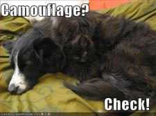funny-pictures-cat-dog-camouflage.jpg