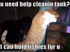 funny-pictures-cat-helps-clean-fishtank.jpg