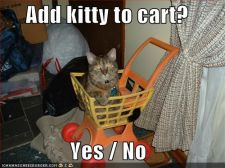 funny-pictures-cat-shopping-cart.jpg