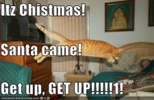 funny-pictures-christmas-cat-wakeup.jpg
