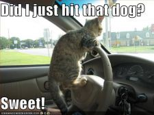 funny-pictures-driving-cat-hits-dog.jpg