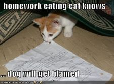 funny-pictures-homework-eating-cat.jpg