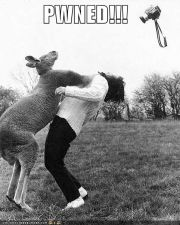 funny-pictures-kangaroo-punch.jpg