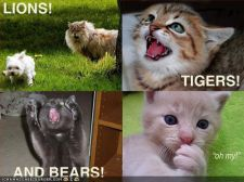 funny-pictures-lions-tigers-bears-cats.jpg