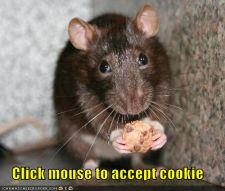 funny-pictures-mouse-cookie.jpg
