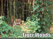 funny-pictures-tiger-woods.jpg