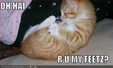 lolcats-funny-picture-my-feet.jpg